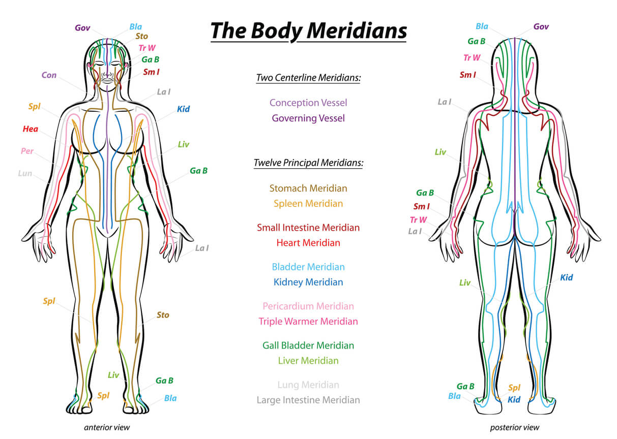diagram showing the 12 chinese yin yoga body meridians on the front and back of a woman's body