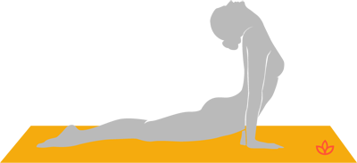 what is bhujangasana  definition from yogapedia