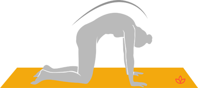 what is catcow pose  definition from yogapedia