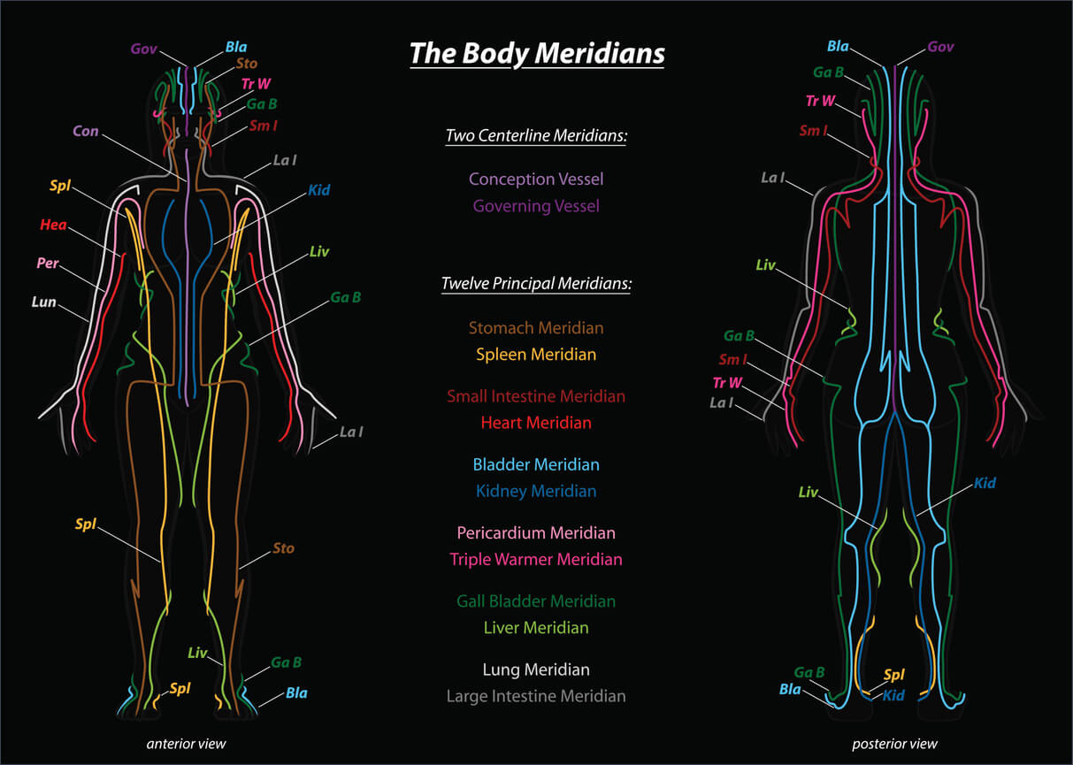 diagram showing the 12 chinese yin yoga body meridians on the front and back of a man's body