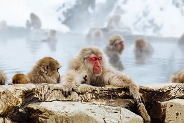 Get Your 'Monkey Mind' to Unwind Using These 4 Methods