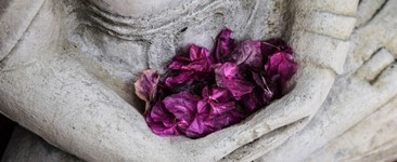 purple flower petals held in hands of Buddha statue