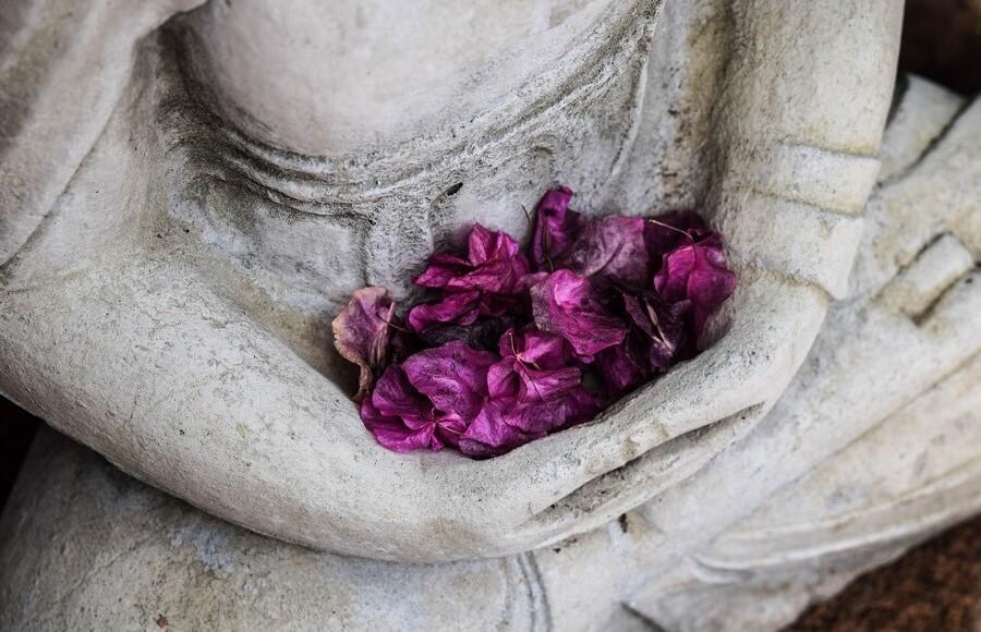 purple flower petals held in hands of Buddha statue