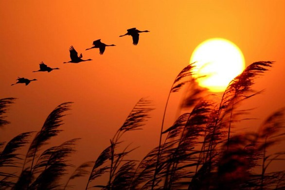 Here Comes the Sun: Salute Its Life-Giving Glory With This Surya Namaskara Series
