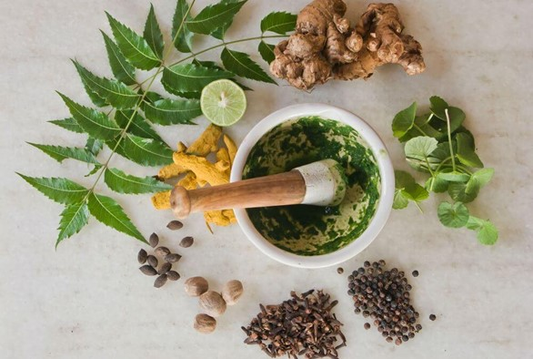 Ayurveda's Top 5 Medicinal Plants for Restoring Balance to the Body