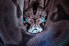 Kundalini Shakti: The Meaning of the Sleeping Serpent