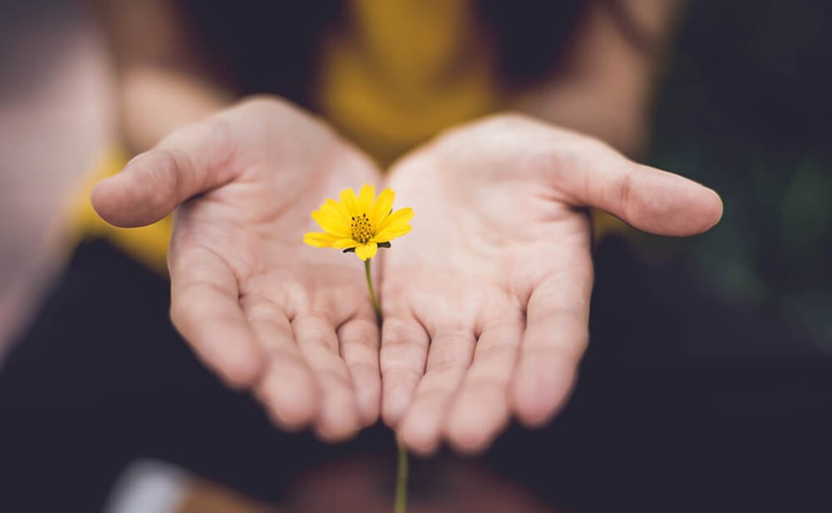 small yellow flower held between two hands with palms up