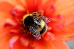 Bumblebee Breath: The Power of Bhramari Pranayama