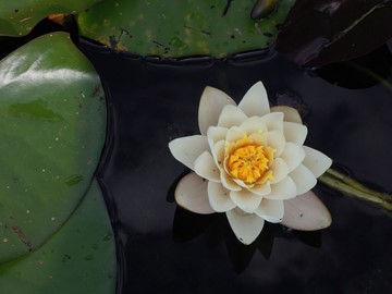 No Mud, No Lotus: Why the Difficulties in Life Support Our Spiritual Growth